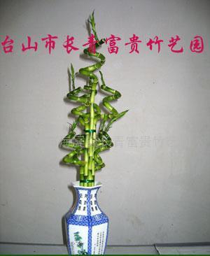 6条富贵竹编织方法图解