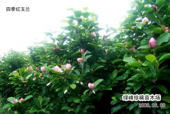 泸州玉兰山风景区
