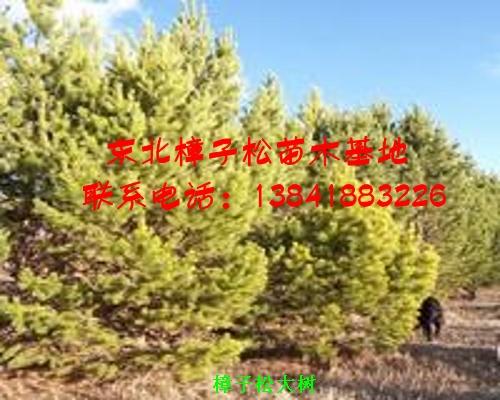 彰武县章古台镇伟林苗圃