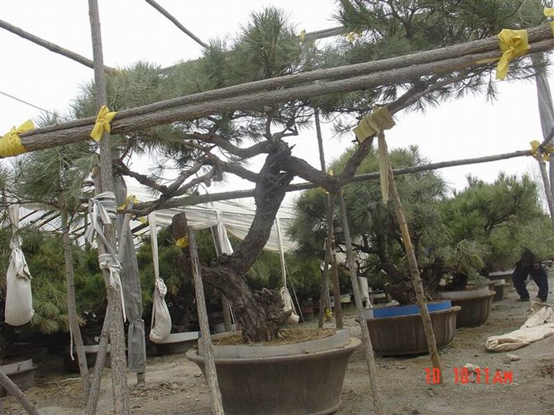 山东大树园林景观工程有限公司
