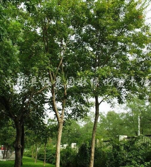 沭阳县好景园林绿化苗木场