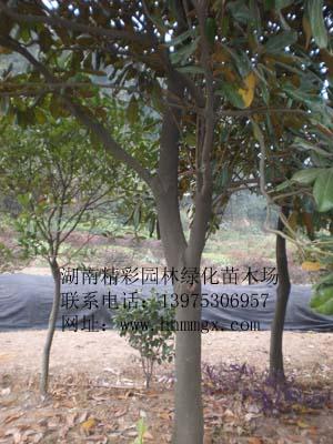 葫芦丝浏阳河谱子展示