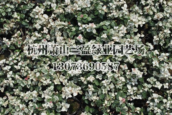 花叶粘贴画人物