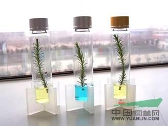 首页 上海杉一植物科技有限公司 产品供应 > 微型圣诞树   联系方式