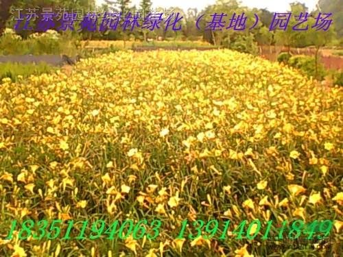 禅意莲花矢量图_康之园
