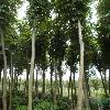 龙柏、卫矛、扶芳藤、垂丝海棠、豆瓣黄杨、金丝柳、栾树