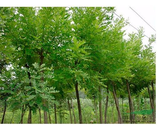 商:沭阳县闻香苗木园艺场