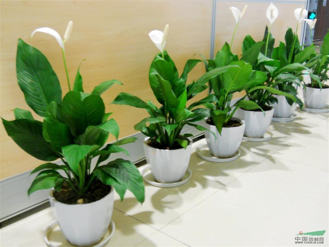 室内耐阴盆栽植物