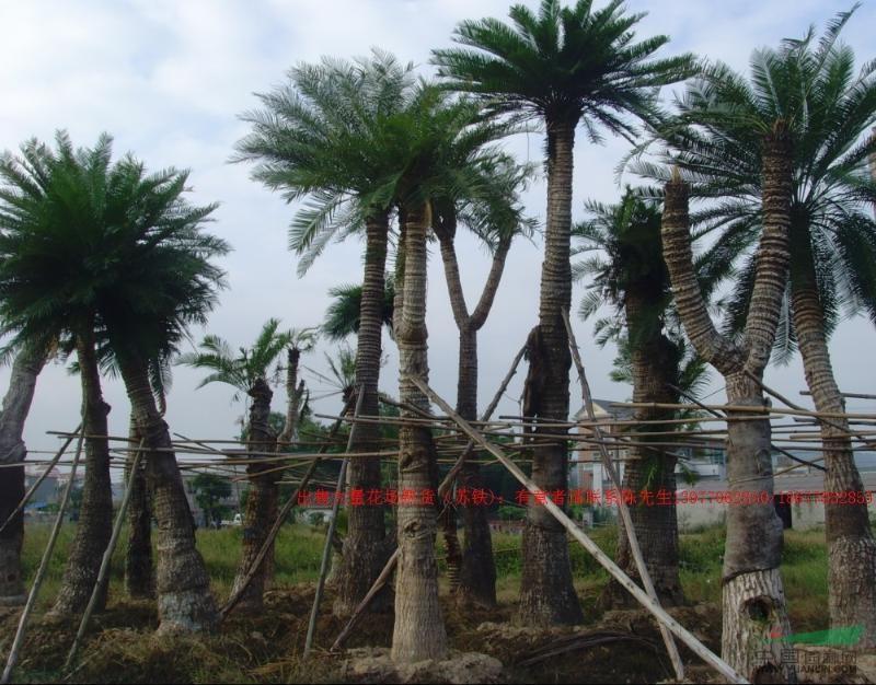 名贵景观树有那些 东北三大名贵树种 北方名贵树种 北方有-东北名贵图片