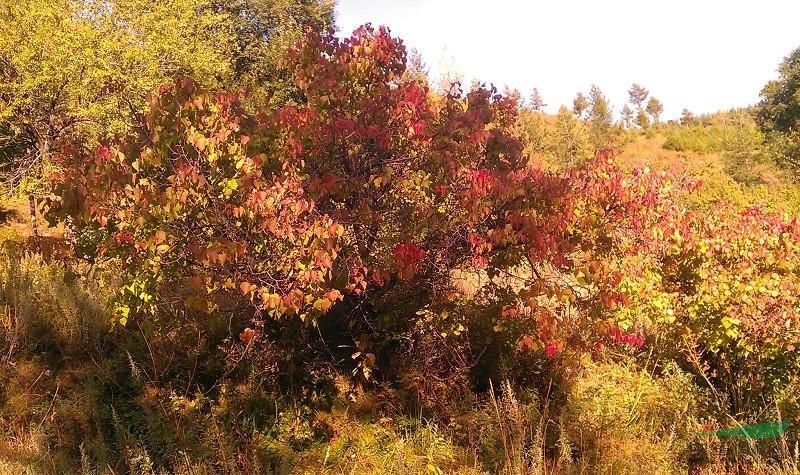 5-8米,樟子松,油松,白桦,五角枫,蒙古栎,华北落叶松,沙棘,山杏,暴马