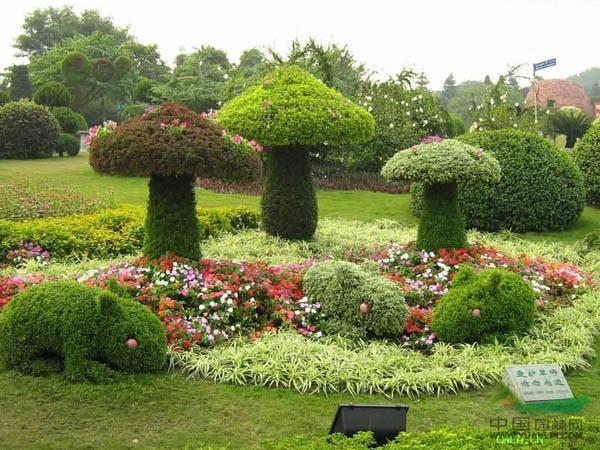 绿化苗木.青州金龙园艺造型