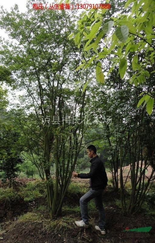 花木风景树图片大全