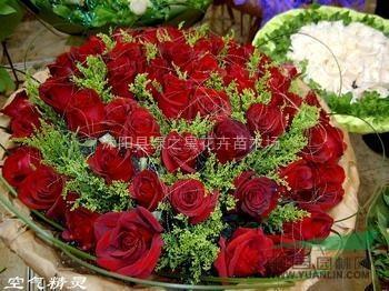 玫瑰花 种子/优质玫瑰花种子种苗百合花种球郁金香种球康乃馨种子牡丹花种子