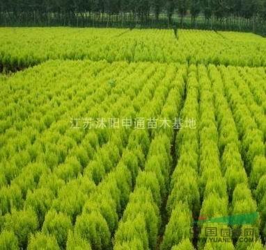 江苏沭阳申通苗木基地位于中国大型苗木基地