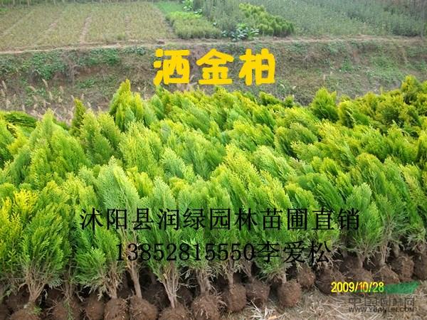 壁纸 成片种植 风景 植物 种植基地 桌面 600_450