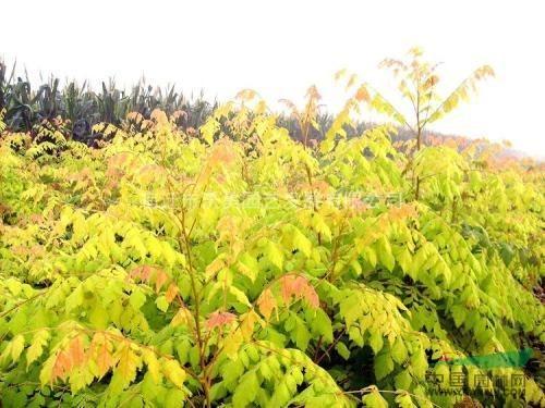 沭阳国际花木节风景