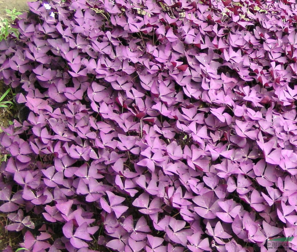 手机壁纸高清 裂纹粉色
