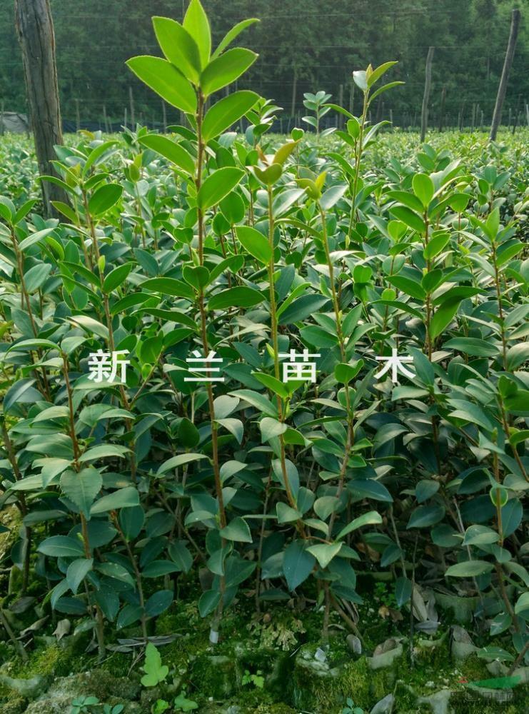 壁纸 成片种植 风景 植物 种植基地 桌面 741_1000 竖版 竖屏 手机