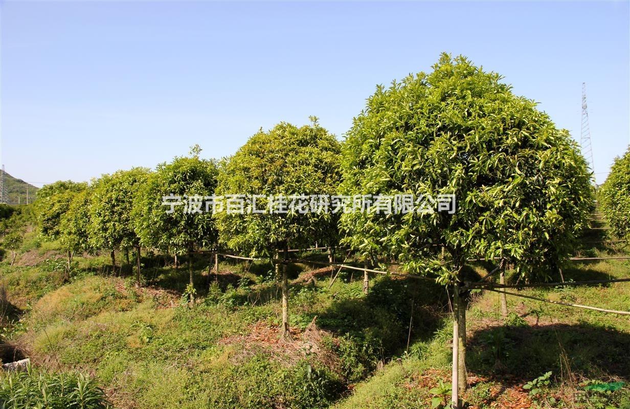 壁纸 成片种植 风景 树 植物 种植基地 桌面 1232_800
