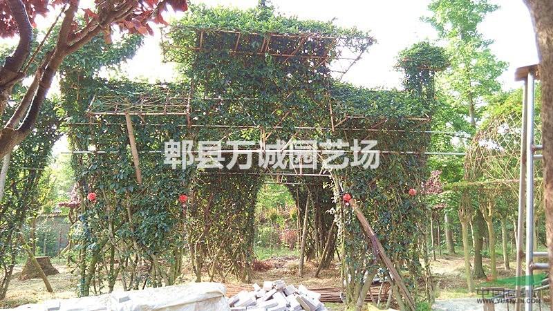 2016年咨询新植物造型,紫薇花瓶,小叶女贞动物造型信息就到郫县万诚