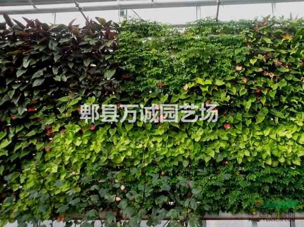 植物墙 垂直花园 室内景观 立体植物墙