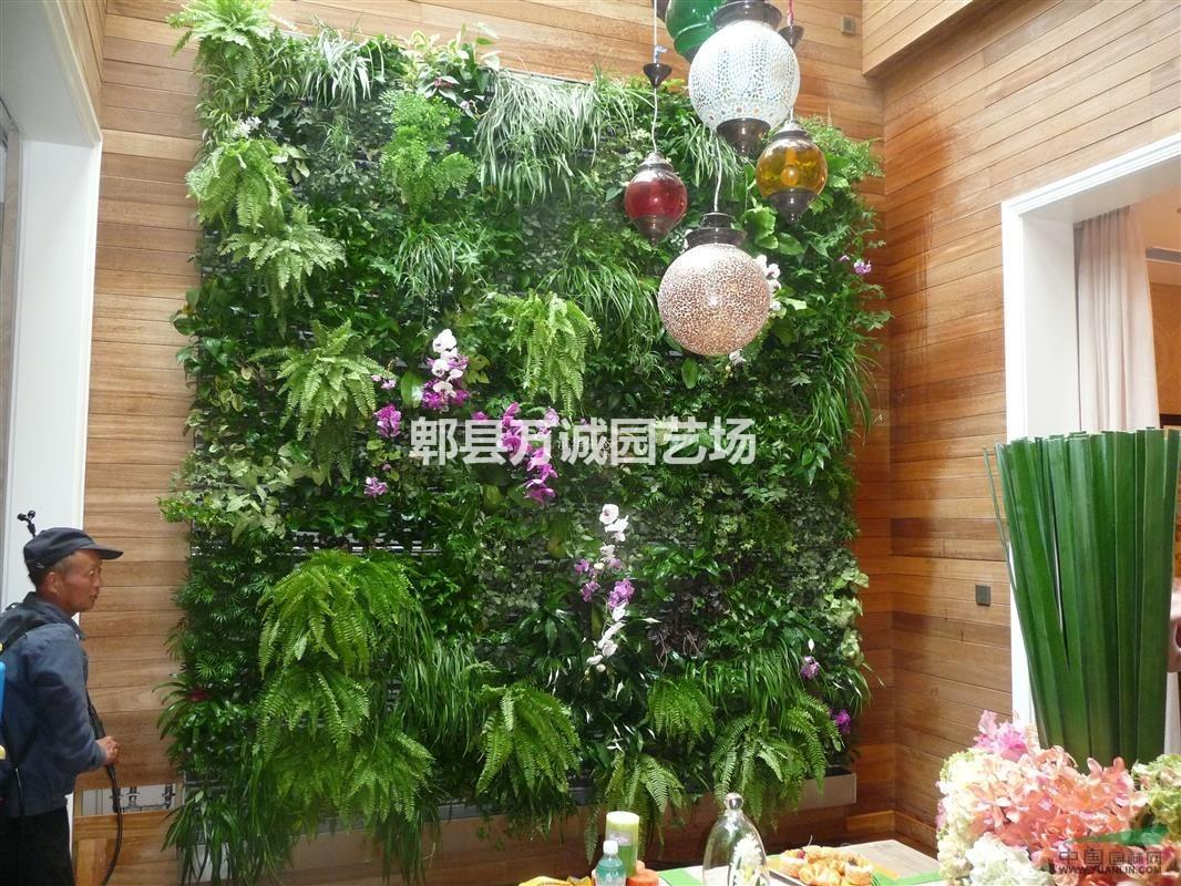 室内景观墙 植物墙 垂直花园 立体植物墙