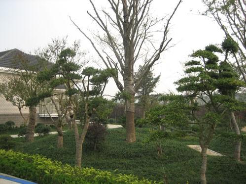 湖南省长沙佳旺苗圃