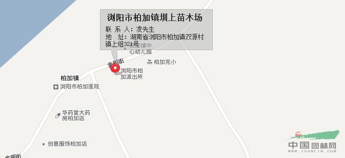 湖南省浏阳市柏加镇圳上苗木场