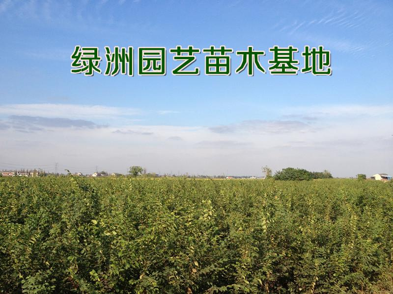 王洪锁(个体经营)