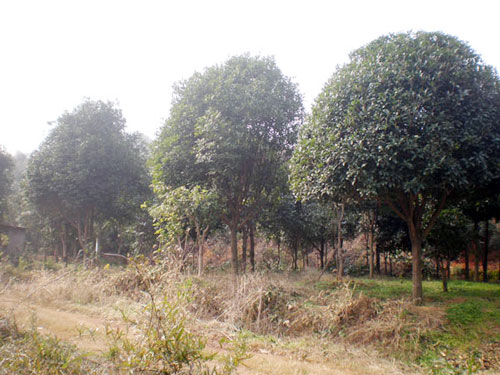 湖北省咸宁市林木种苗场