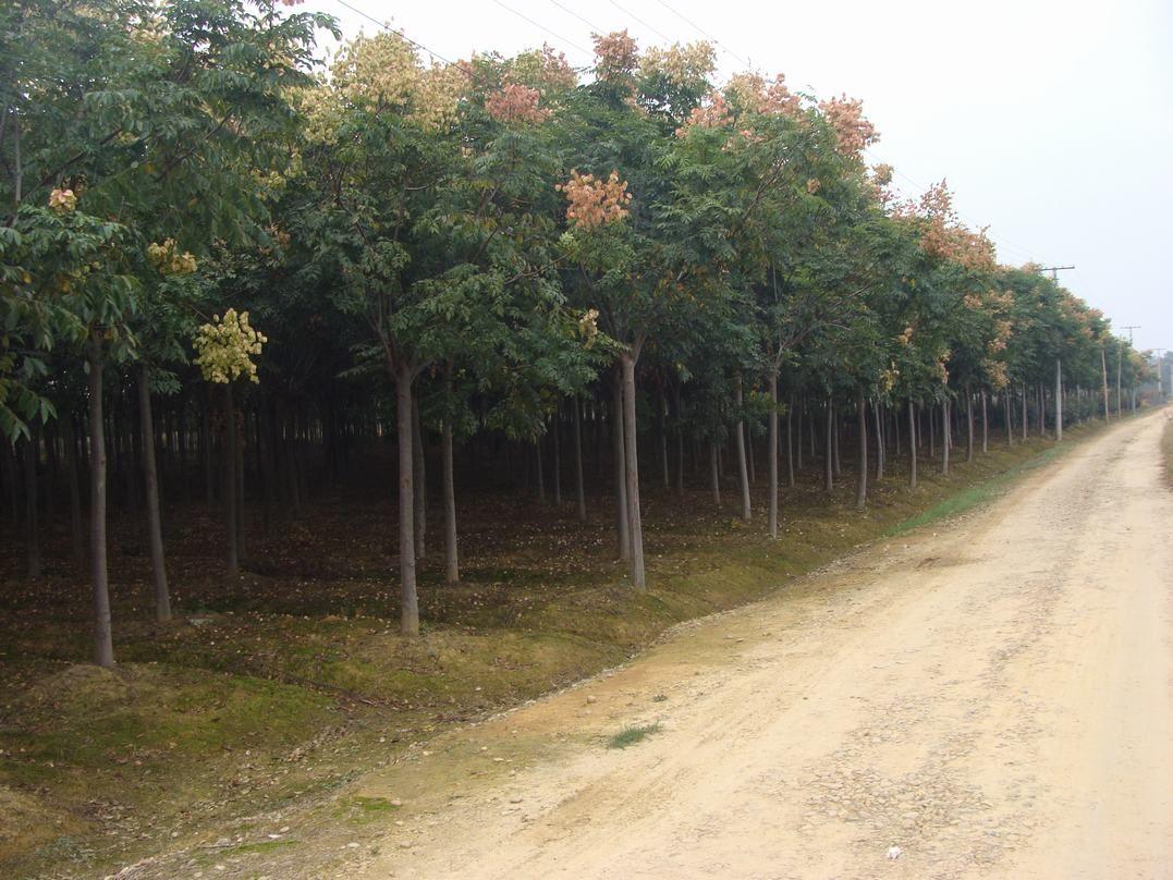 益阳旺盛绿化园林苗木基地