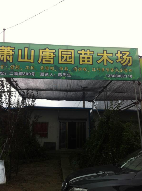 杭州萧山明富花木场