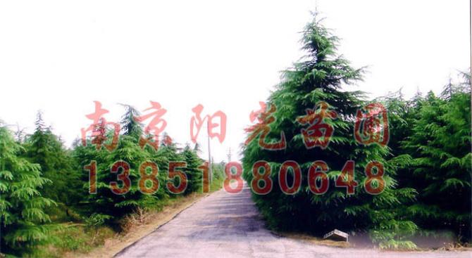 南京市浦口区雪玉苗圃场