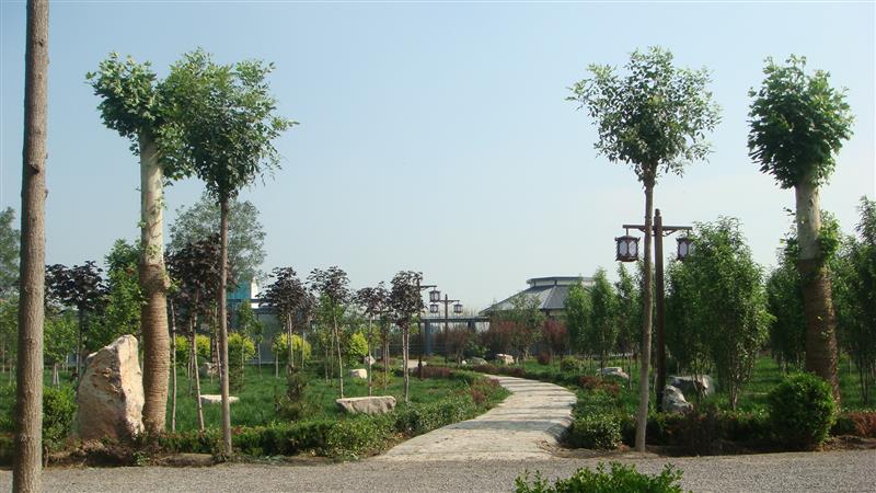 山东亨润德博绿林木种苗有限公司