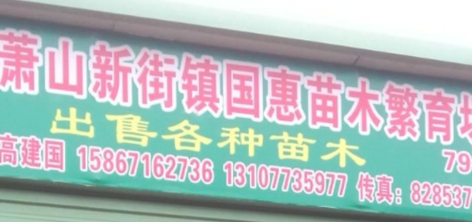 杭州萧山新街镇国惠苗木繁育场