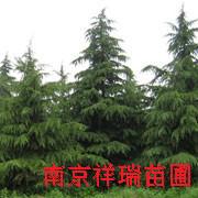 南京随缘园林基地