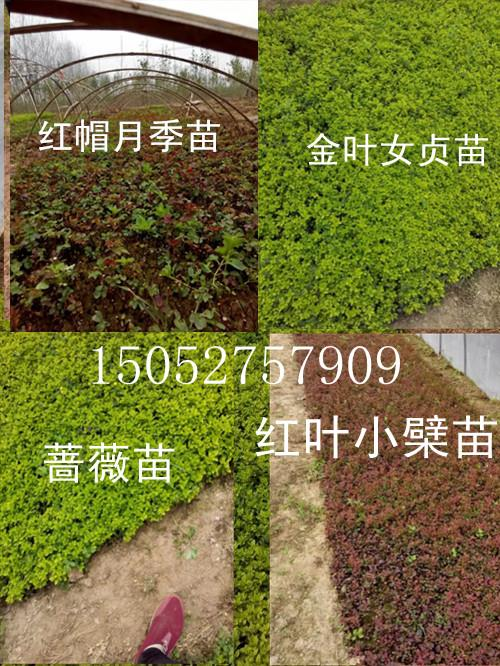 秦盛绿化苗木园艺场
