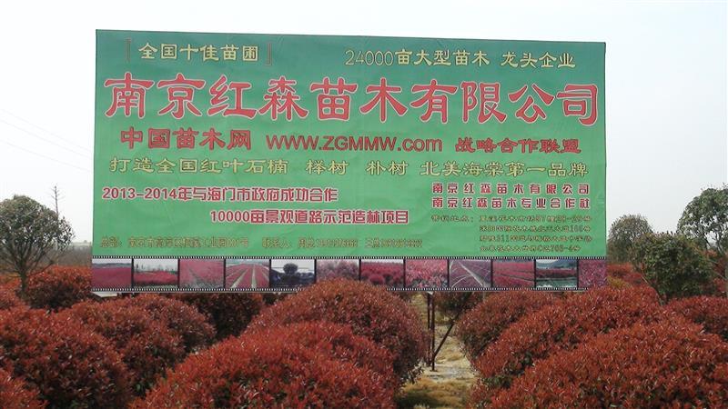 南京红森苗木有限公司