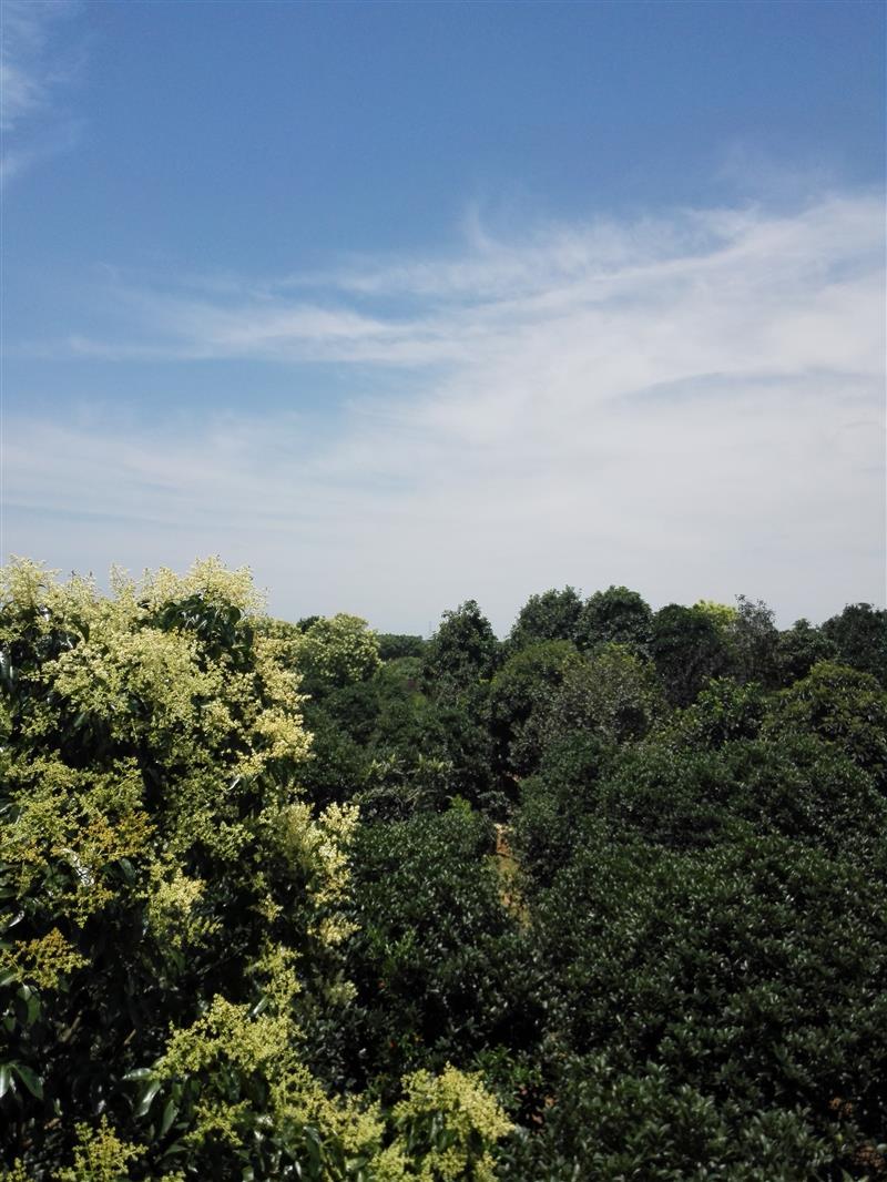 肥西县上派镇刘荣平苗圃