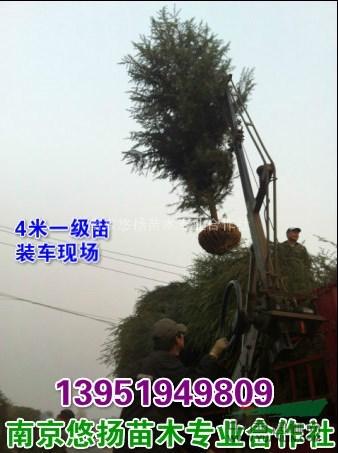 南京悠扬苗木专业合作社