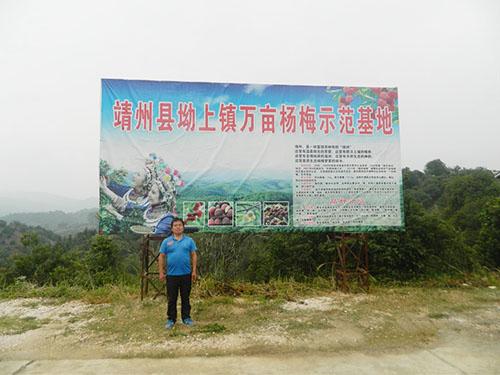 怀化靖州清蛟苗木基地