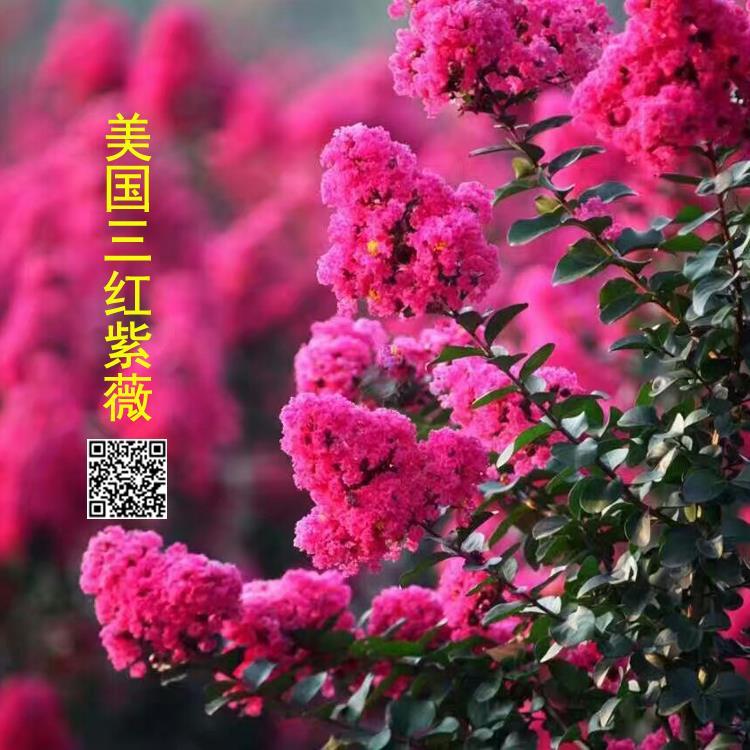 杭州阜民农业科技有限公司