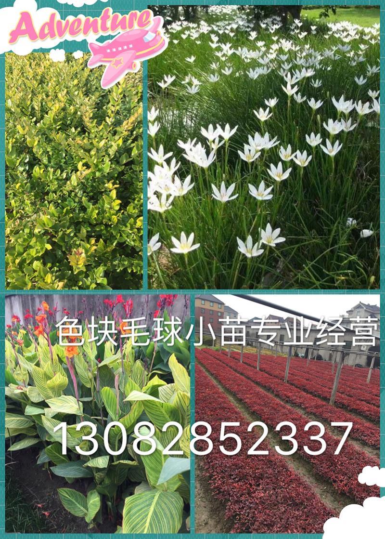杭州卓雅园林有限公司