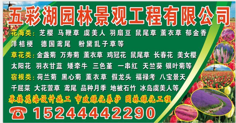 青州市海苓花卉苗木专业合作社