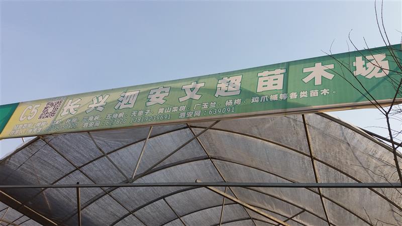 浙江长兴泗安文超苗木场