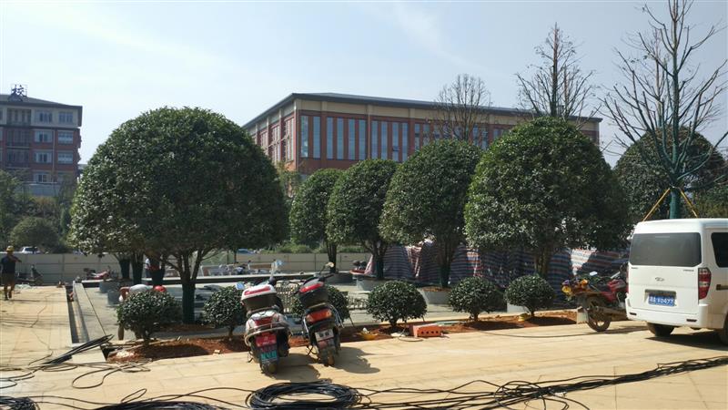 湘南花木交易中心