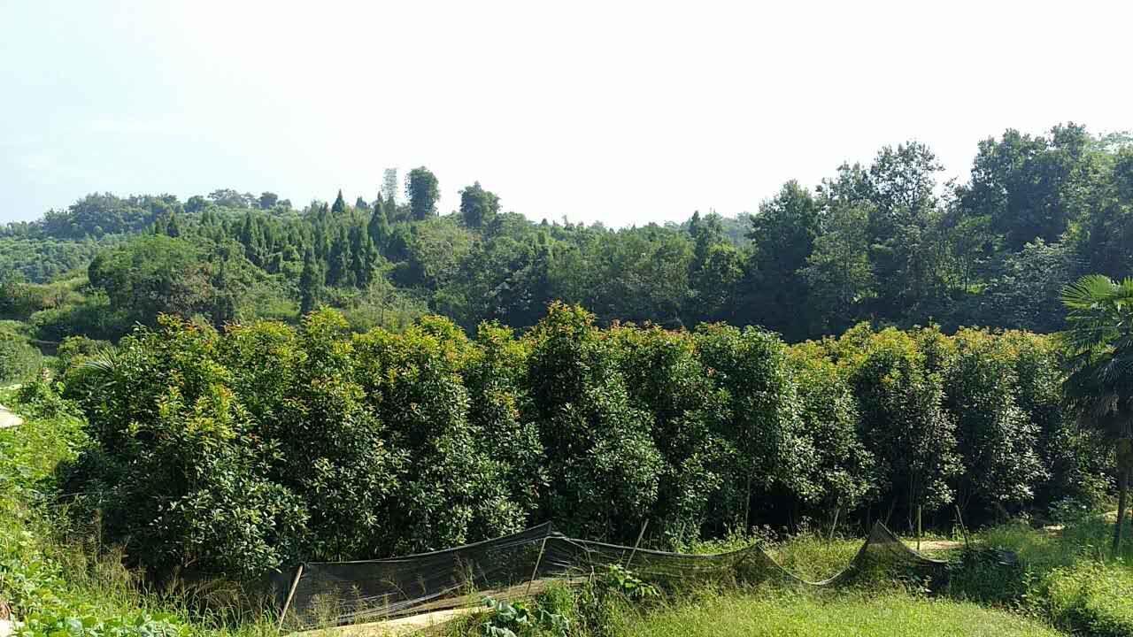 重庆市铜梁区三村树木种植场