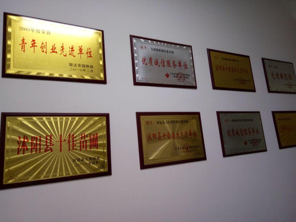 江苏省沭阳县飞创园林绿化园艺场