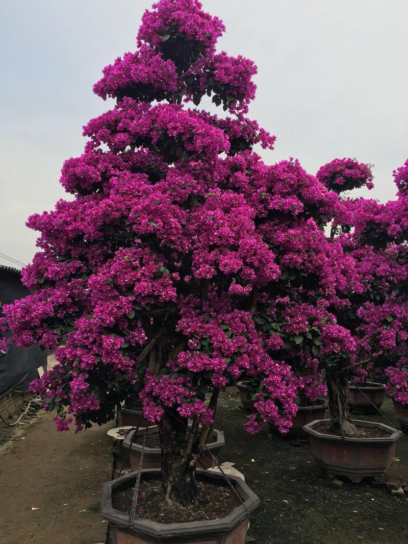 漳浦县马口好客园艺场