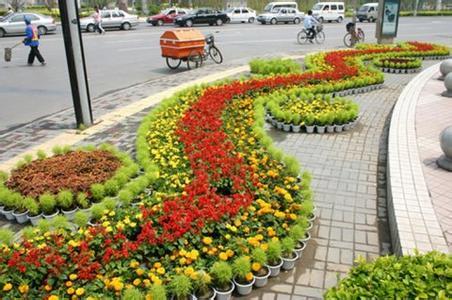 青州市山合水花卉苗木园艺场